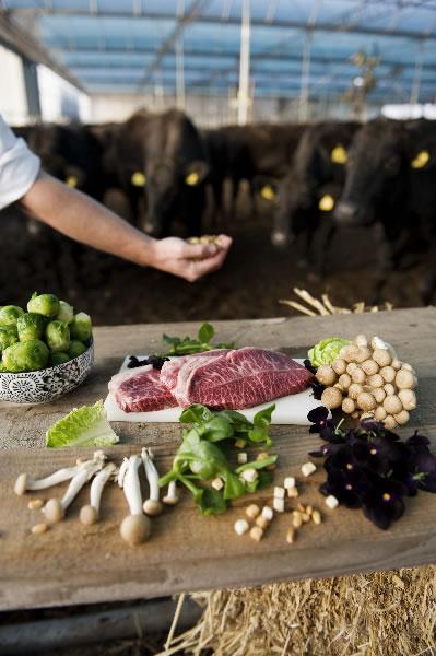 Wagyu-rundersukade met een Westfriese najaarssalade